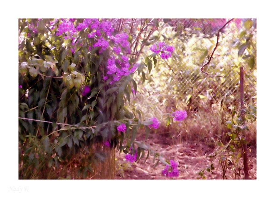 """фото """"Дождик солнечный в саду"""" метки: природа, цветы"""
