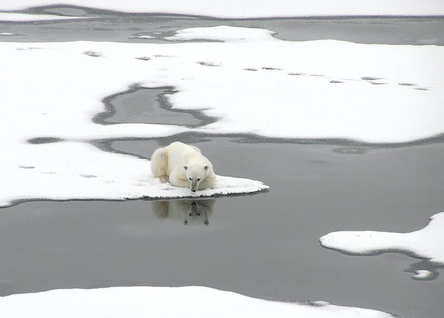 """фото """"Гляжусь в тебя как в зеркало до головокружения..."""" метки: путешествия, природа, дикие животные"""