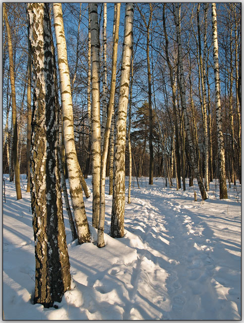 """фото """"Приглашение"""" метки: пейзаж, зима, лес"""