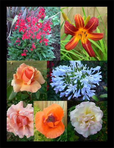 "фото ""Flowers collage"" метки: природа, цветы"