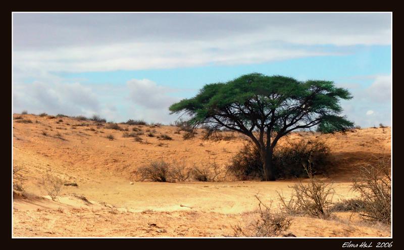 """фото """"В песках пустыни"""" метки: пейзаж, путешествия,"""