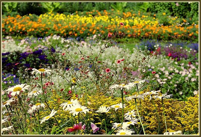 """фото """"Ириновый сад"""" метки: природа, пейзаж, лето, цветы"""