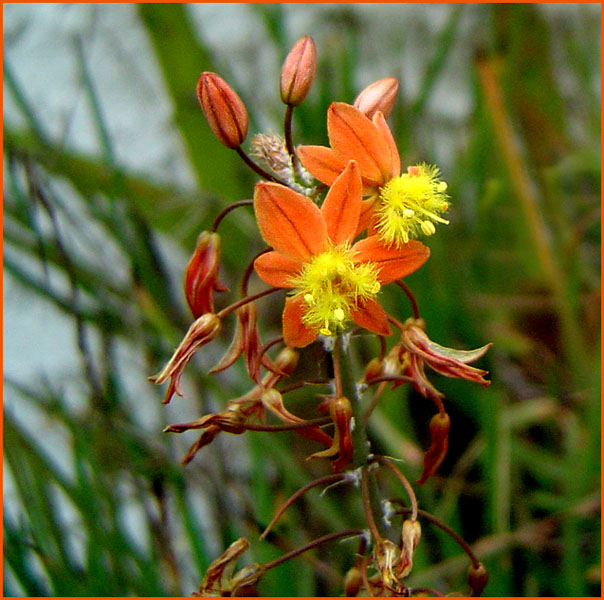 "фото ""Orange"" метки: природа, цветы"