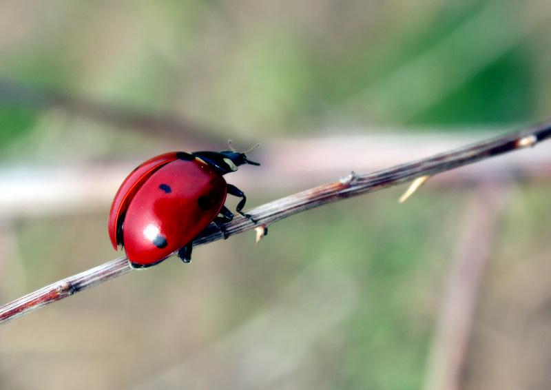 """фото """"после зимней спячки"""" метки: природа, насекомое"""