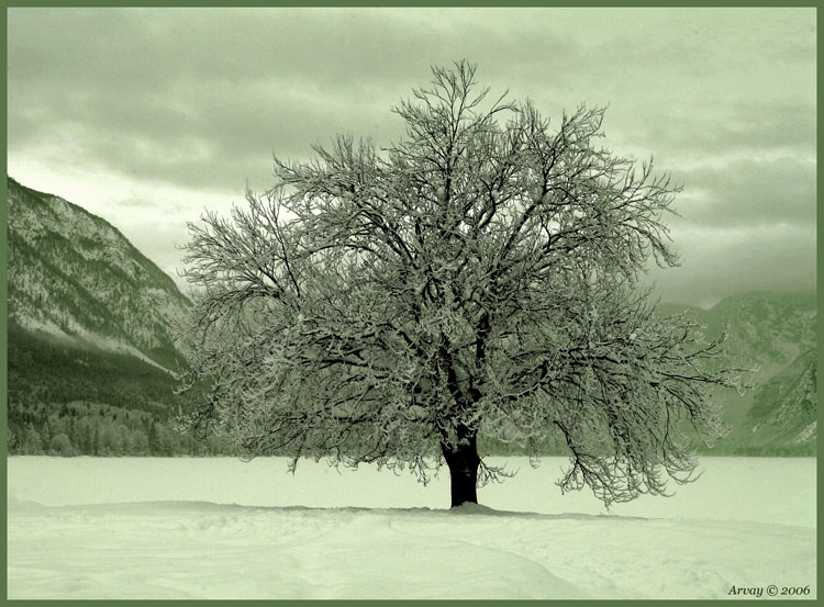 """photo """"Lonelyness"""" tags: landscape, nature, winter"""