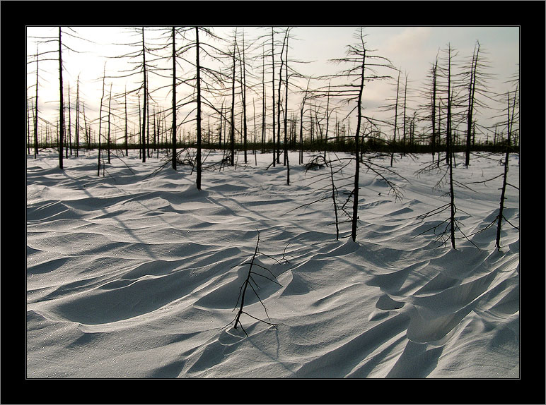 """photo """"По следам ветра / Following the Tracks of the Wind"""" tags: landscape, forest, winter"""
