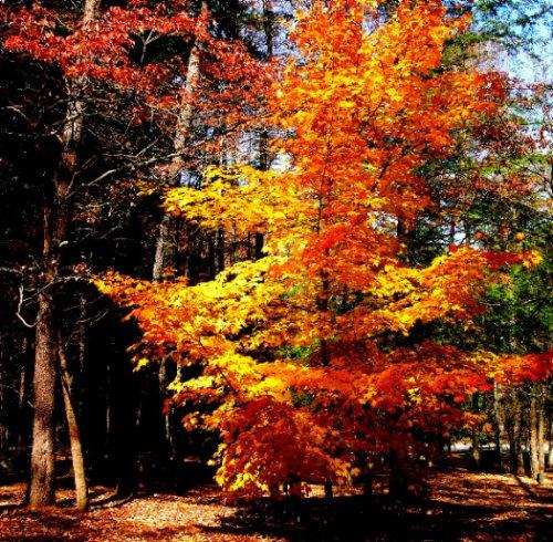 """photo """"Fall Tree"""" tags: nature, landscape, autumn"""