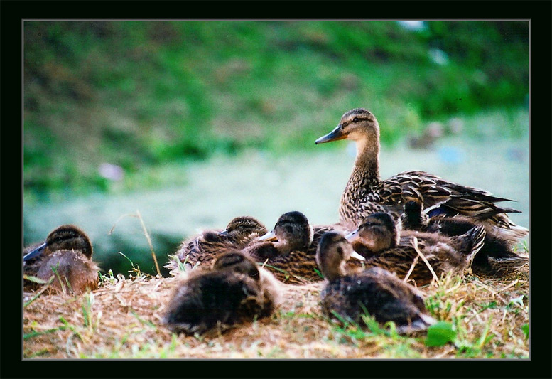 "photo ""Mother"" tags: nature, genre, wild animals"