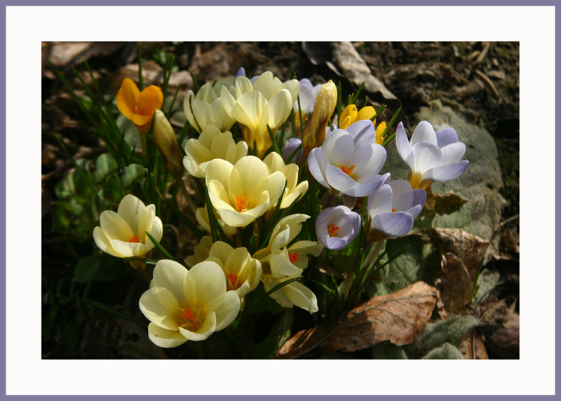 "фото ""A colourful group"" метки: природа, цветы"