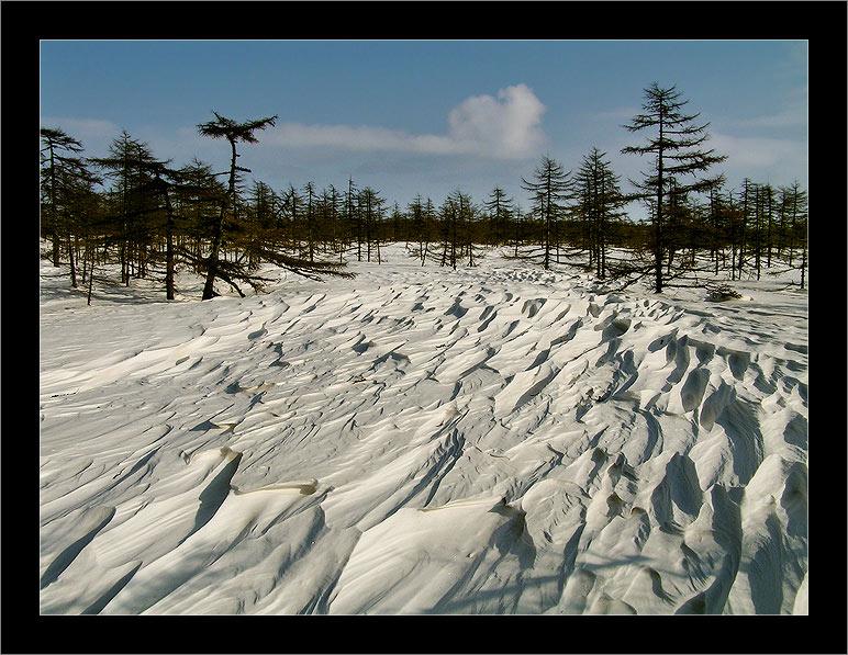 """фото """"По следам ветра 02 / Following the Tracks of the Wind 02"""" метки: пейзаж, зима, лес"""