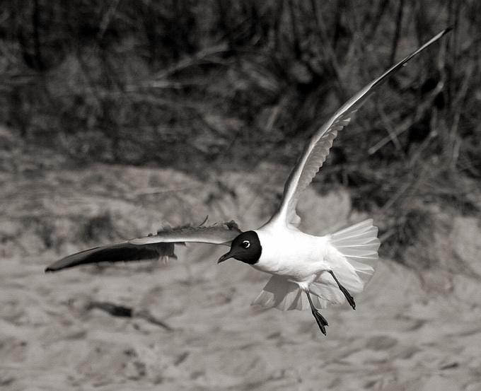 "photo ""Nice flight"" tags: nature, wild animals"