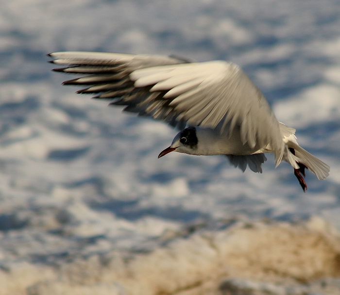 "photo ""Flight in the winter"" tags: nature, wild animals"