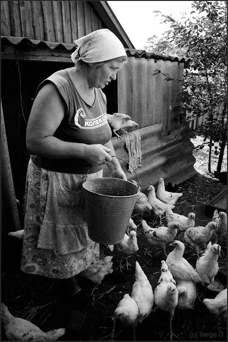 """фото """"Бройлерная фотография"""" метки: черно-белые, природа, домашние животные"""