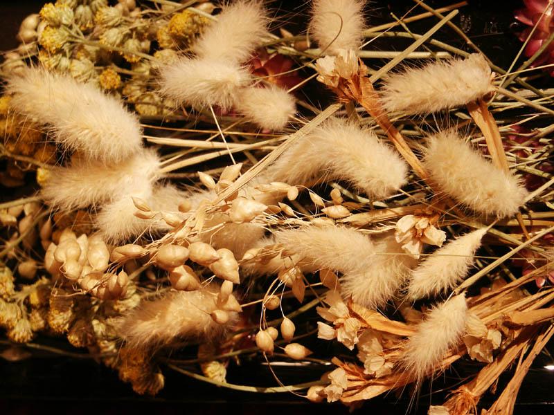 сухоцветы в природе фото