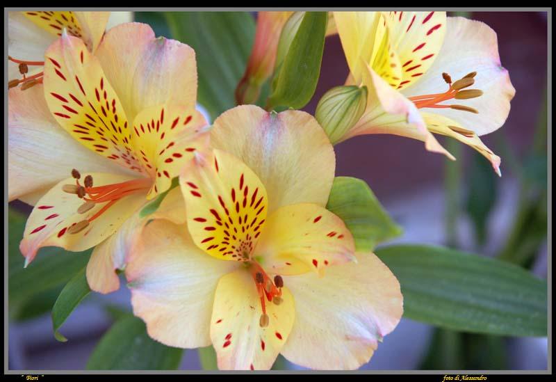 "photo ""fiori"" tags: nature, flowers"