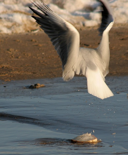 "photo ""Bread"" tags: nature, wild animals"