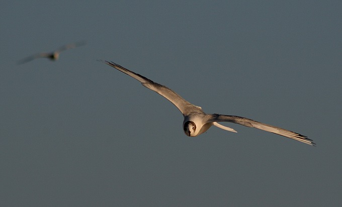 "photo ""2 flights"" tags: nature, wild animals"