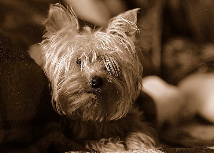 "photo ""birthday my doggy"" tags: nature, pets/farm animals"