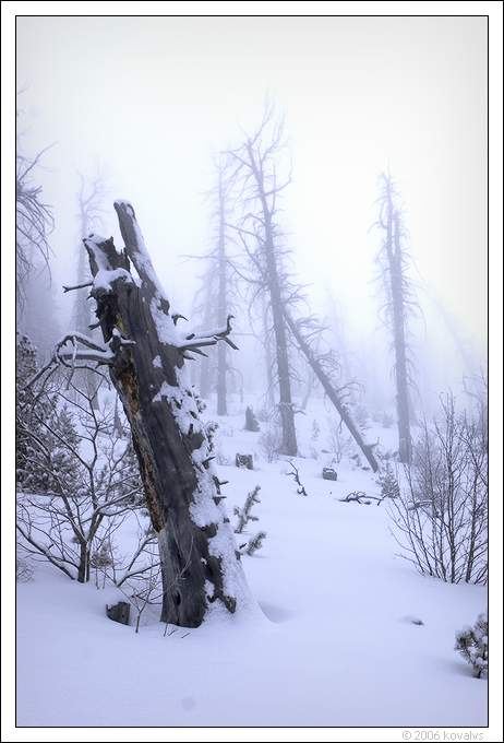 "photo ""winter fog in the dead forest"" tags: landscape, nature, winter"