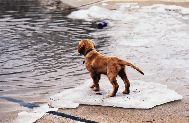 "photo ""my pup on the ice at the wading pool in the park 1999"" tags: nature, pets/farm animals"