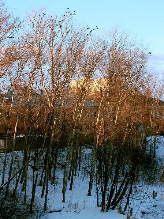 "photo ""Птицы"" tags: landscape, spring"