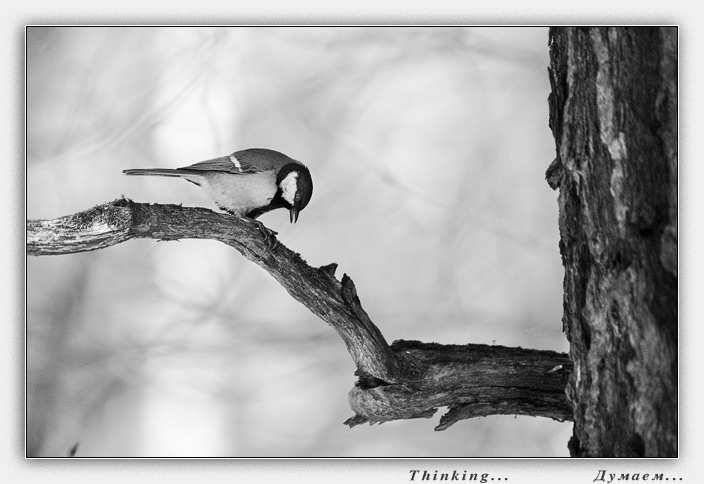 "photo ""Thinking..."" tags: nature, wild animals"