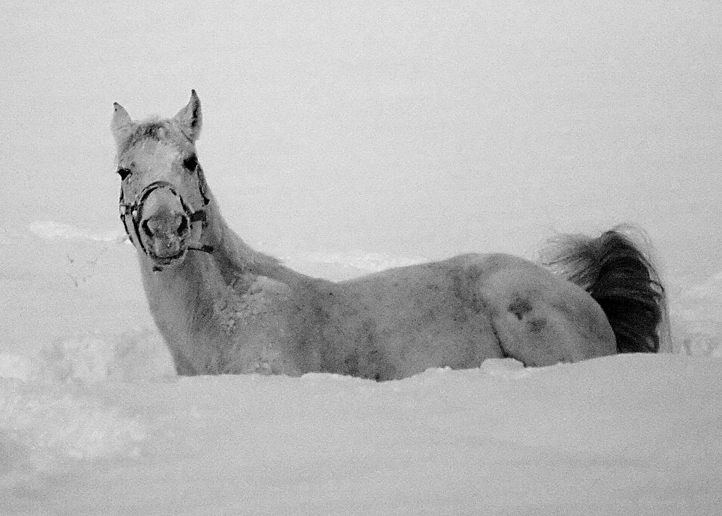 "photo ""enjoy on the snow"" tags: nature, pets/farm animals"