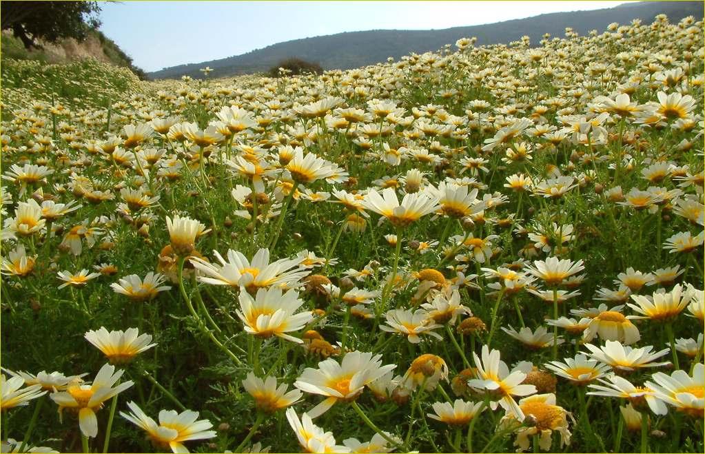 """фото """"***"""" метки: пейзаж, природа, цветы"""
