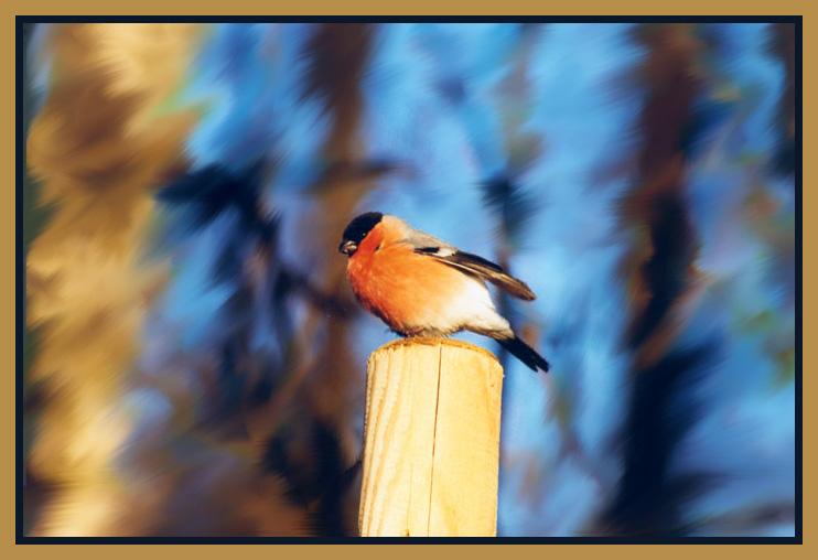 "photo ""winterbird"" tags: nature, wild animals"