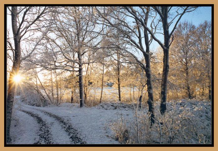 """photo """"Winterstar"""" tags: landscape, winter"""
