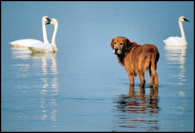 "photo ""my dog with some swim buddies"" tags: nature, pets/farm animals"