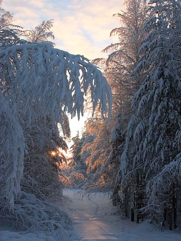 "фото ""Footpath to the sun..."" метки: пейзаж, зима"