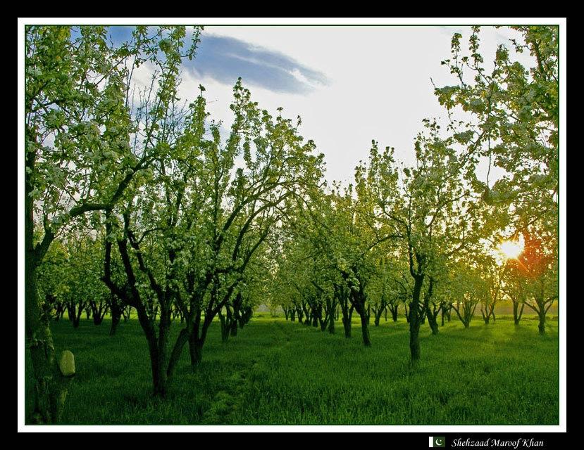"photo ""Spring SunRise"" tags: landscape, spring, sunset"
