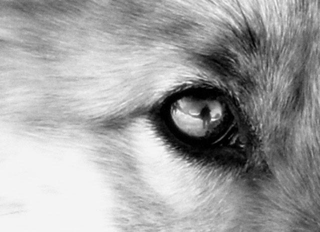 """фото """"глаза-зеркало души"""" метки: природа, дикие животные"""