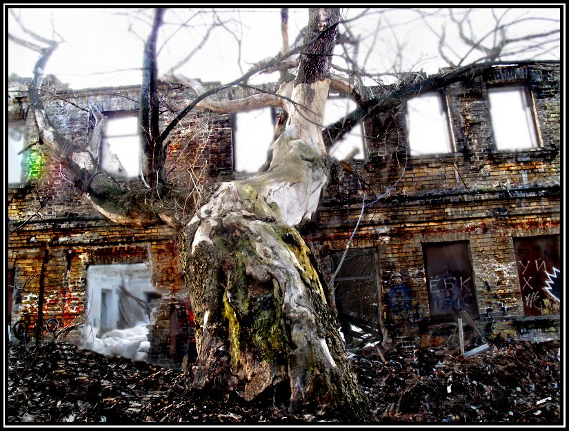 "фото ""Дерево и Дом"" метки: архитектура, пейзаж,"