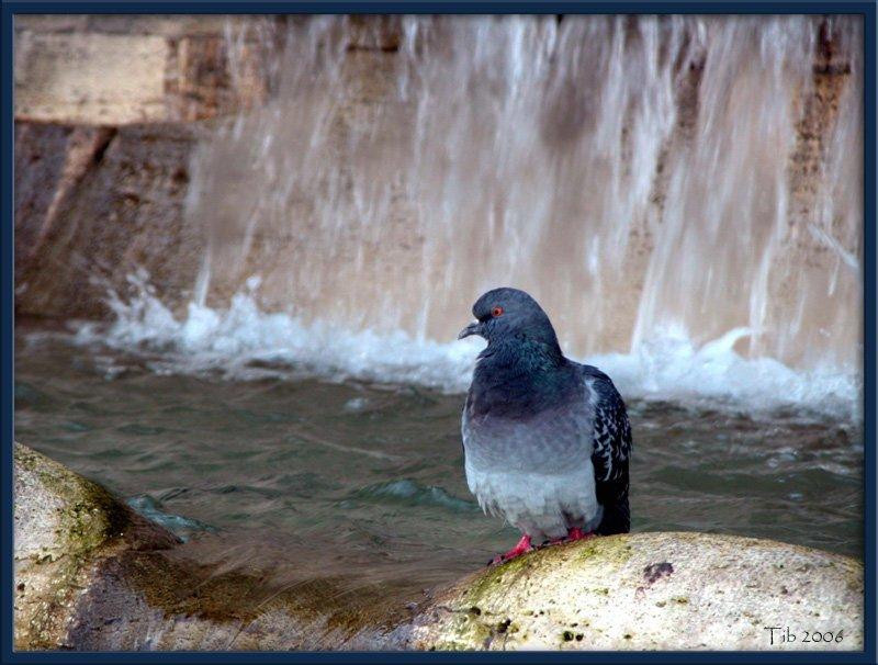 "photo ""Colomba"" tags: nature, pets/farm animals"