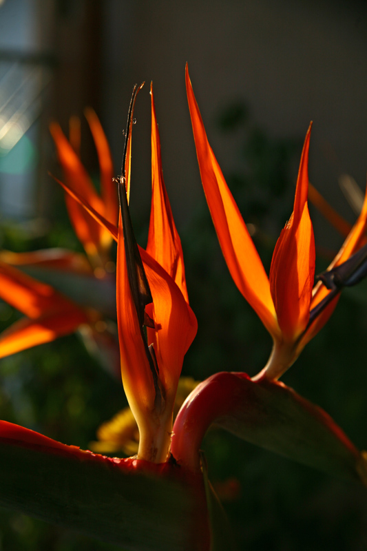 "photo ""Fire"" tags: nature, flowers"