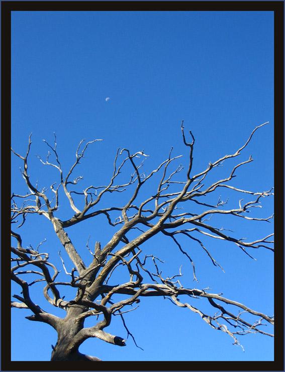 "photo ""Dead tree"" tags: nature,"