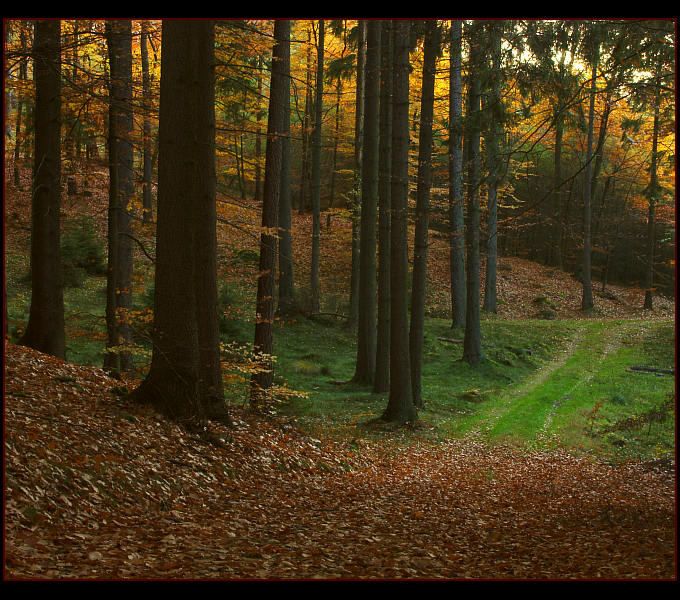 "photo ""Autumn memories"" tags: landscape, autumn, forest"