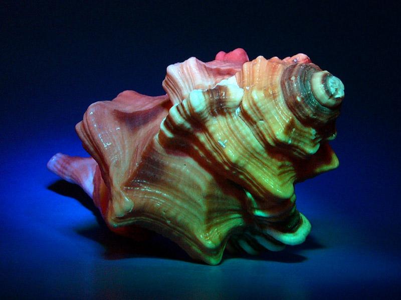 """photo """"Shell"""" tags: still life, macro and close-up,"""