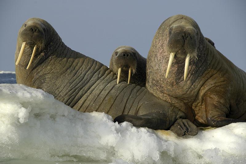 """фото """"Triumvirat"""" метки: природа, дикие животные"""