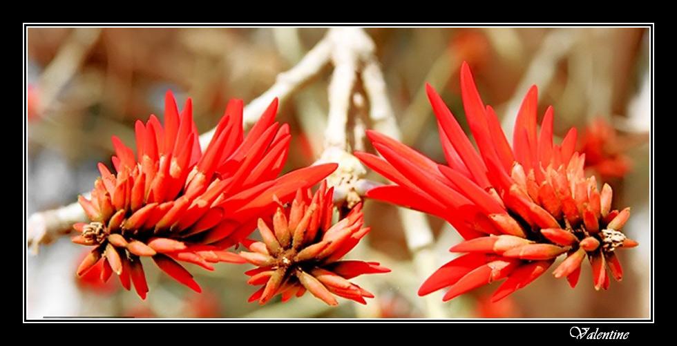 """фото """"Багрянник"""" метки: природа, цветы"""