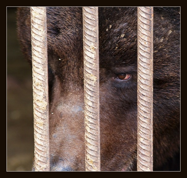"photo ""Sooner or later you'll forget to lock the cage ..."" tags: nature, wild animals"