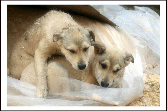 "photo ""Tender awakening"" tags: nature, genre, pets/farm animals"