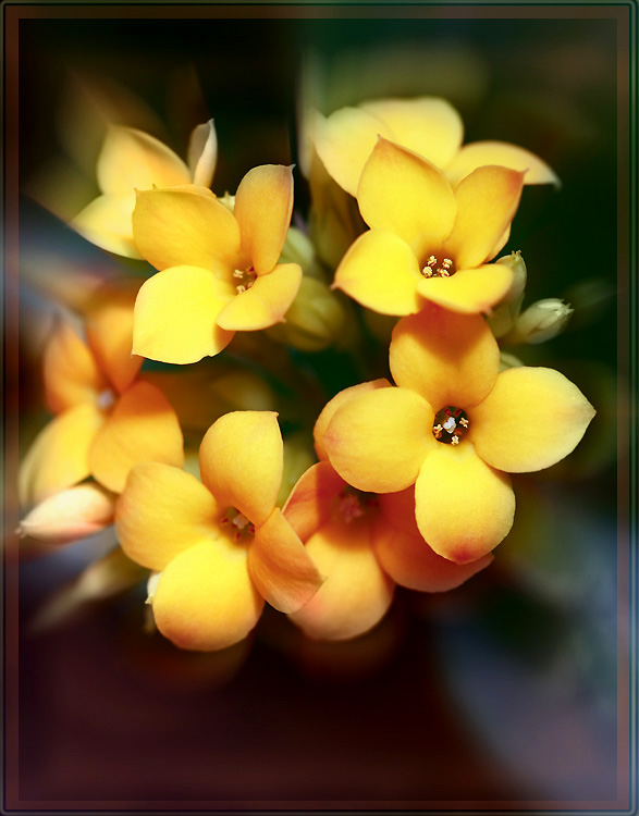 "photo ""Light - bouquet"" tags: nature, macro and close-up, flowers"