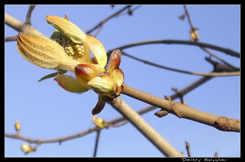"фото ""Скоро весна"" метки: ,"
