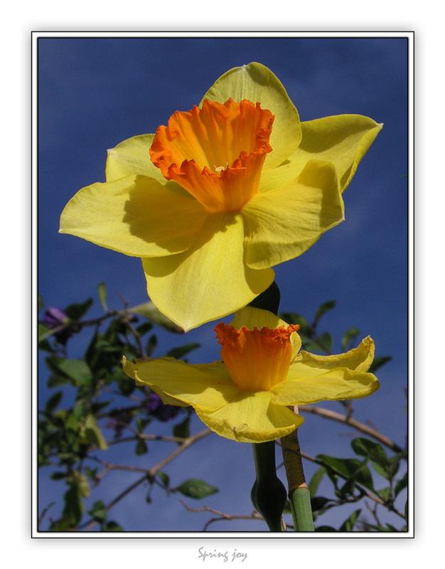 "photo ""Spring Joy"" tags: landscape, nature, flowers, spring"