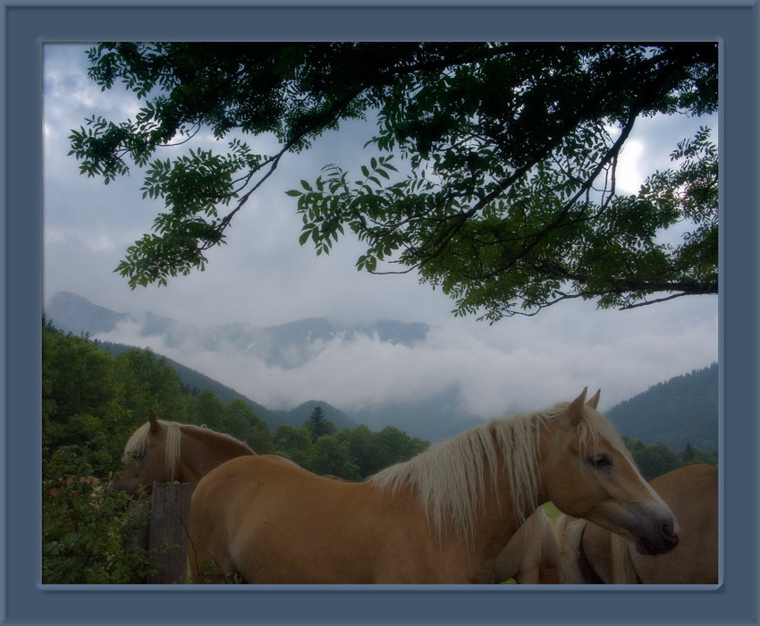 "photo ""Mountains will be soon"" tags: landscape, nature, mountains, pets/farm animals"