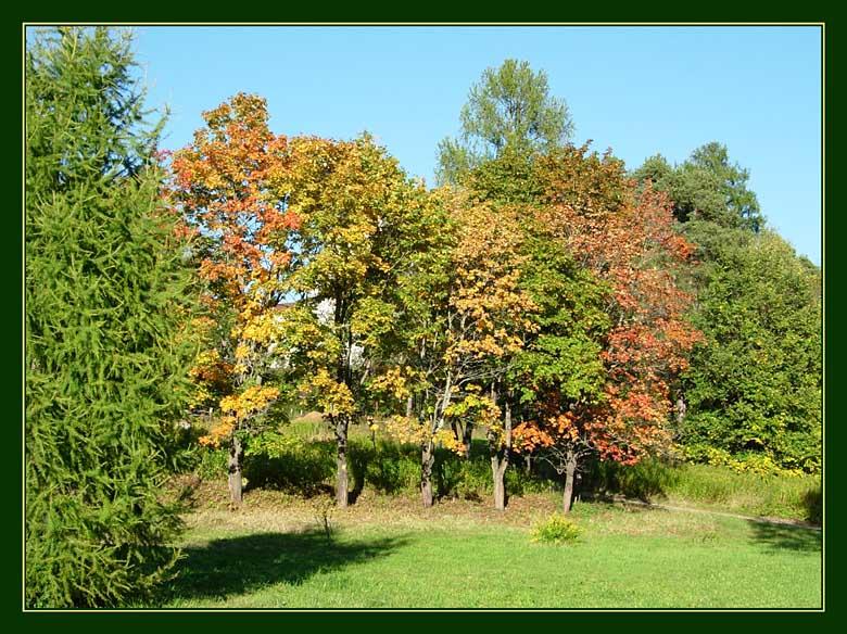 """фото """"Краски осени"""" метки: пейзаж, природа, осень"""
