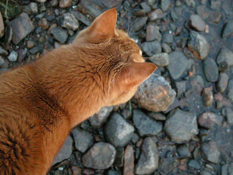 "photo ""cat on the rocks (my buddy RIP 1989-2006)"" tags: nature, pets/farm animals"